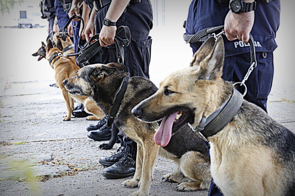 Policyjne psy ustawione w szeregu.
